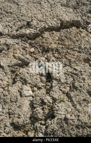 Deep cracks in water parched soil of cropped area - metaphor for drought, crop failure, crop losses, famine, heatwave concept, water crisis. - Stock Image