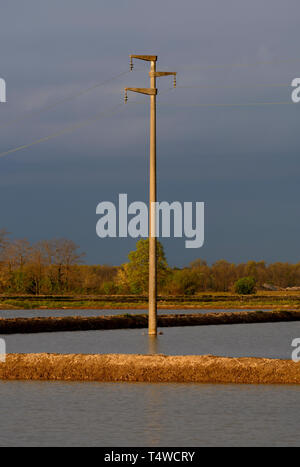 Electricity pole immersed in the water of a rice field - Stock Image