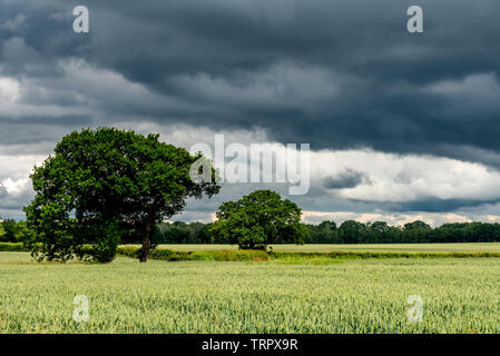 South Downs, UK. 11th June, 2019. Changeable weather conditions on the South Downs near Horam today Credit: Andrew Hasson/Alamy Live News - Stock Image