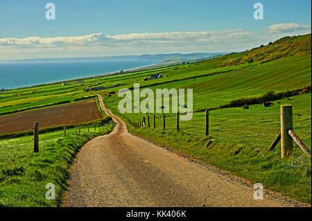 Country lane across rural Dorset heading towards the sea, between Abbotsbury and Bridport. - Stock Image