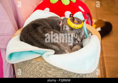 Cat resting at Happy Neko Cat Cafe in Shibuya, Tokyo, Japan with a kitten donut on its head - Stock Image