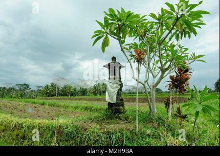 Small shrine or Sanggah Ulun Carik in rice fields near Ubud, Bali, Indonesia - Stock Image