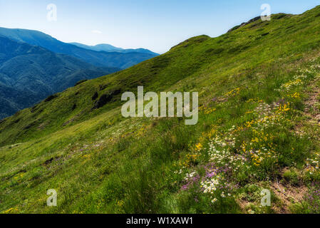 Panoramic morning scene, beauty summer mountain landscape, attractive view of green forest valley - Stock Image