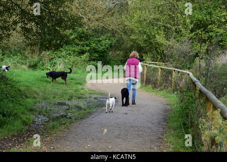 Bournemouth, UK. 04th October, 2017. Sunny autumn day in Stour River Valley nature Park, Bournemouth. Credit: Ajit - Stock Image