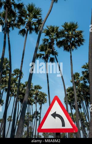Palm trees captured at Goa, India. - Stock Image