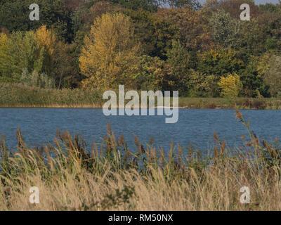 Pond in autumn - Stock Image