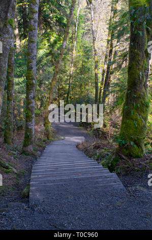 Wooden steps leading down a forested trail in Cliff Falls, Kanaka Creek Regional Park, Maple Ridge, British Columbia, Canada. - Stock Image