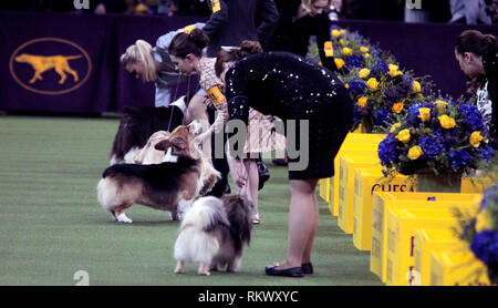 New York, USA. 12th Feb 2019. Westminster Dog Show - New York City, 12 February, 2019: Junior Handlers await judging at the 143rd Annual Westminster Dog Show, Tuesday evening at Madison Square Garden in New York City. Credit: Adam Stoltman/Alamy Live News - Stock Image