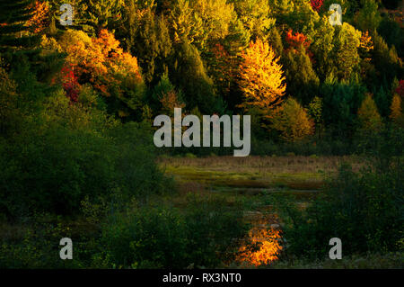 Orange maples are lit up like fire and reflected in a nearby wetland under a setting sun, Gatineau National Park, Quebec, Canada - Stock Image