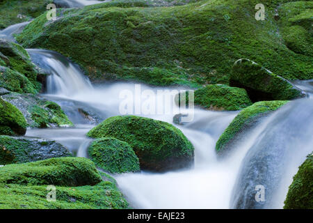 Forest brook, stones overgrown with green moss - Stock Image