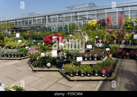 Displays of colourful Summer plants and shrubs on sale at the Garden Centre, Beckworth Emporium, Mears Ashby, Northamptonshire, UK - Stock Image