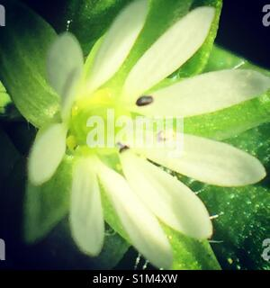 Macro white flower - Stock Image