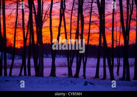 Sunset behind row of bare tree trunks in winter - Stock Image