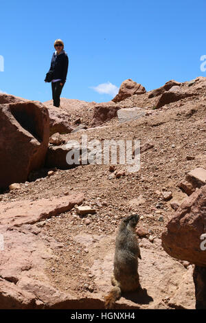 Hiker on trail looking at marmot Peak Rocky Mountain National Park ridge Colorado - Stock Image