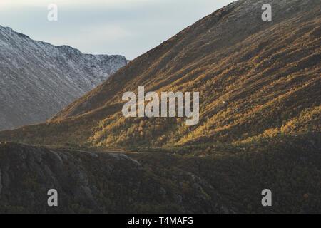 Trees in their Autumn colours near Trondheim, Norway - Stock Image
