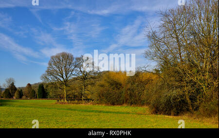 Devon countryside view with rolling green hills and trees, winter, near Bickleigh, Tiverton, UK - Stock Image