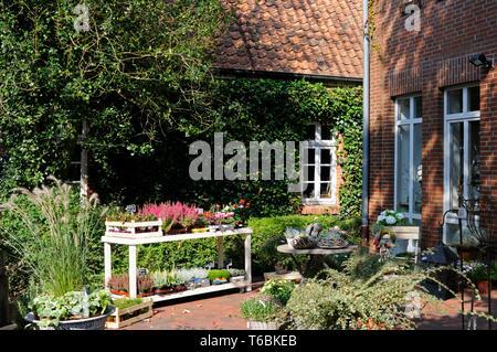 Blumenladen mit Herbstpflanzen zum Verkauf.   Flower shop with autumn plants for sale. - Stock Image