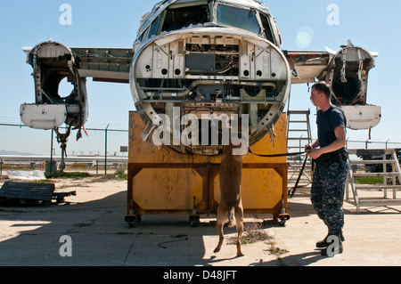 A military working dog conducts training. - Stock Image