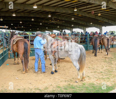 American cowboy and his grey horse saddled at a rodeo event in Montgomery Alabama, USA. - Stock Image