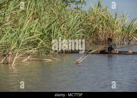 A woman on a dugout canoe among river plants, Sepik River, Papua New Guinea - Stock Image