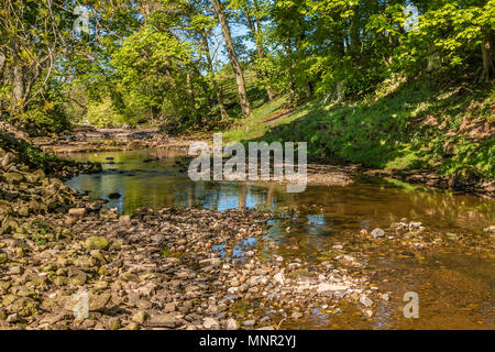 North Pennines landscape, wooded riverbanks on the upper reaches of the River Greta in spring sunshine, near Bowes, Teesdale, UK - Stock Image
