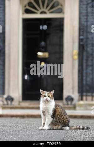 Larry the cat outside 10 Downing Street, London. - Stock Image