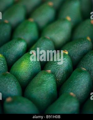 Avocados - Stock Image