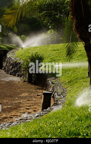 sprinklers sprinkler system systems water watering growing plants grass hot climate plant plants watered lawn lawns - Stock Image