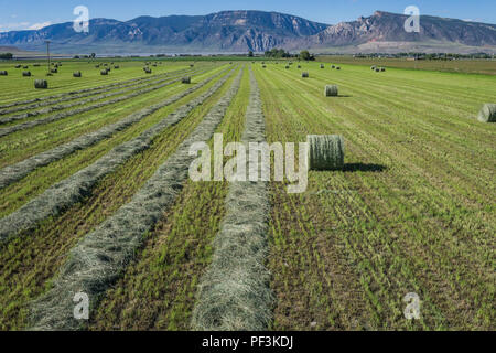 Green hay field being harvested in the western plains of Wyoming. - Stock Image