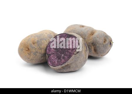 Blue Potato, variety Purple Majesty - Stock Image