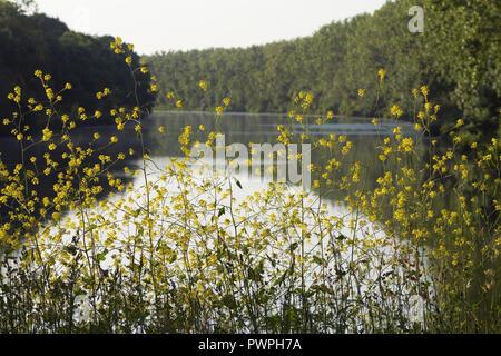 France, Canal de La Martiniere, spring. - Stock Image