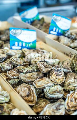 High Angle View Of Seafood On Display - Stock Image