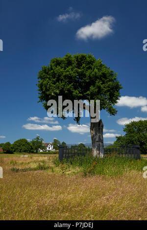 The Royal Oak Boscobel House Boscobel Shropshire West Midlands England UK - Stock Image