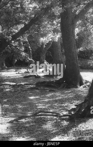 Tree glen in the sunlight in black and white. - Stock Image