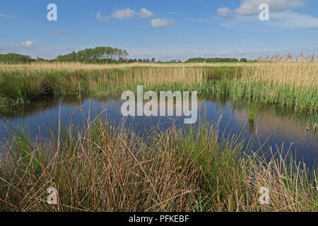 view over Higher Level Stewardship land  Hempstead Marshes, Eccles-on-Sea, Norfolk    May - Stock Image