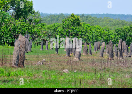 Magnetic Termite Mounds, Amitermes Meridionalis, Lichfield National Park,Northern Territory, Australia - Stock Image