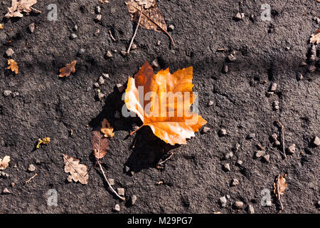 Colorful fallen leaf in autumn on the textured ground - Stock Image