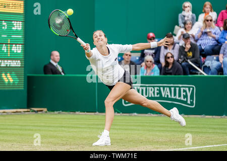 Edgbaston Priory Club, Birmingham, UK. 21st June, 2019. WTA Nature Valley Classic tennis tournament; Petra Martic (CRO) reaches for a forehand in her quarterfinal match against Jelena Ostapenko (LAT) Credit: Action Plus Sports/Alamy Live News - Stock Image
