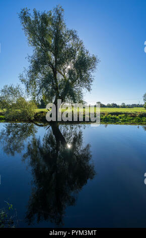 Autumn sun through tree reflected in river - Stock Image
