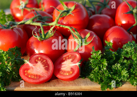 Home grown ripe organic tomatoes - Stock Image