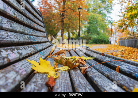 autumn landscape in a city park yellow leaves on a bench for relaxing on a background of green trees - Stock Image
