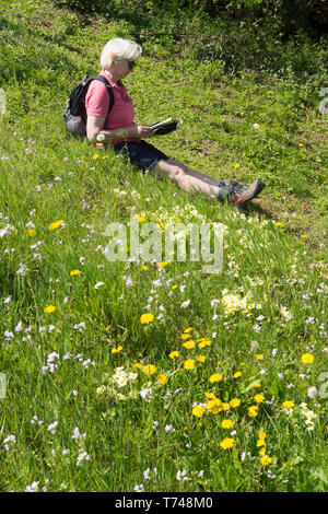 Mature woman in fifties resting while taking a walk in wild flowers, rucksack, map, shorts, appropriate clothing, Sussex, UK. Spring, April. - Stock Image