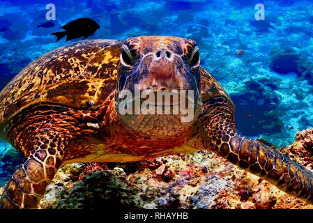 Close up view of sea turtle on Samsung 'The Wall' MicroLED TV, exhibit booth at CES, world's largest consumer electronic show, Las Vegas, NV, USA - Stock Image