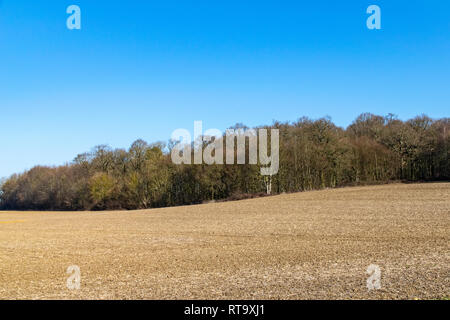 Agricultural field in front on winter woodland scene on a warm sunny day in February - Stock Image