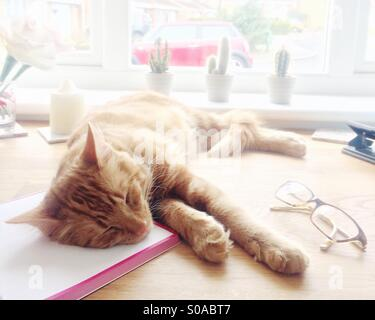 Working from home - Stock Image