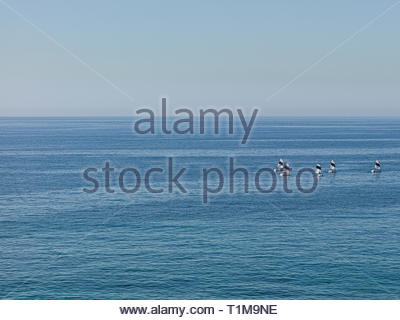 Sailboats engaged in sailing lesson on sunny blue ocean, Quinto district, Genoa, Liguria, Italy - Stock Image