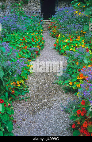Colourful planting of Borage and Nasturtium in a kitchen garden - Stock Image