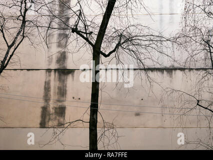 bare trees against building wall - Stock Image