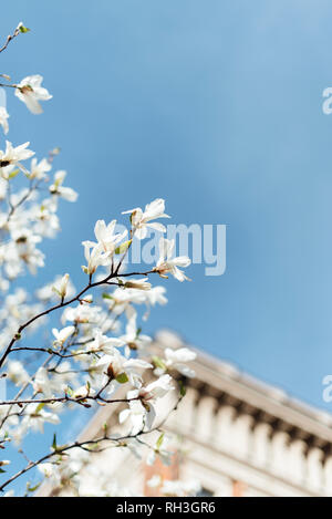 Flowers on twigs - Stock Image
