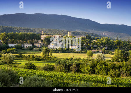 Vineyard, Cuceron, Provencial Village, Vaucluse Department, Luberon, Provence, France - Stock Image